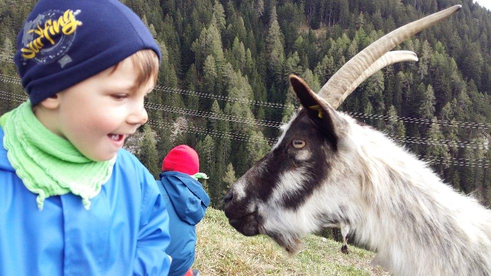Bauernhof Familie Hassler in Zorten