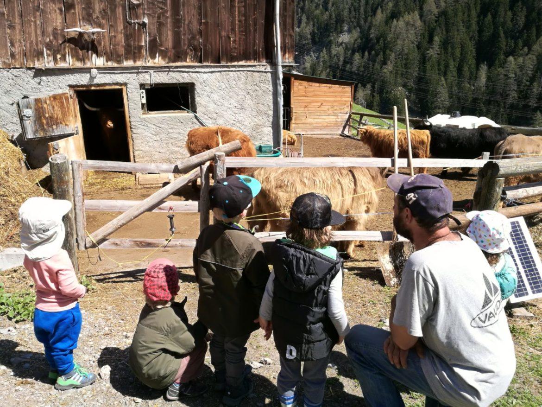 Bauernhofprojekt Sommer 2018